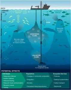 Wissenschaftler befürchten, dass die Abwässer von Manganknollen-Abbau die Ozeane großflächig verschmutzen könnten.